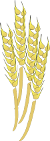 Image of Sheaf of Wheat
